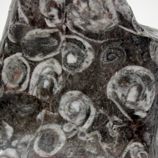 Fossil Stone Lamp